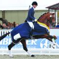 First Ampere Excels at 2016 World Young Horse Championships